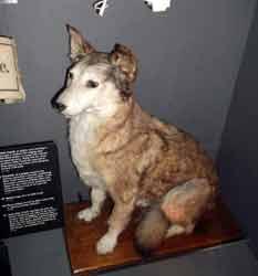 Edith Cavells Dog Imperial War Museum