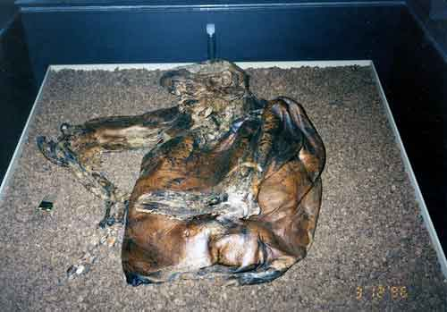 Lindow Man at the british Museum Picture by Skinnylawyer