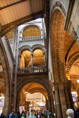 museum natural history main hall