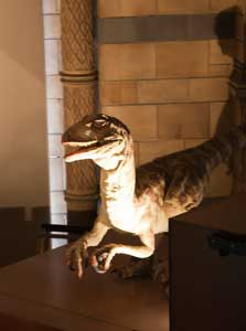 natural history museum london small dinosaur
