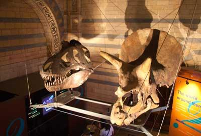 natural history museum dinosaurs