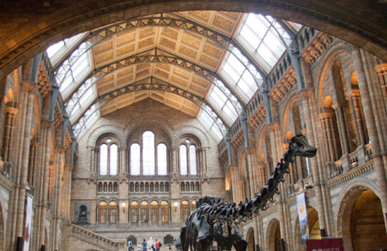 Natural History Museum London Main Hall
