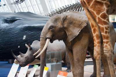 natural history museum mammals