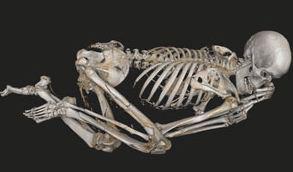 Virtual Autopsy British Museum