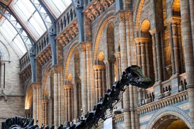 museum natural history main hall dinosaur